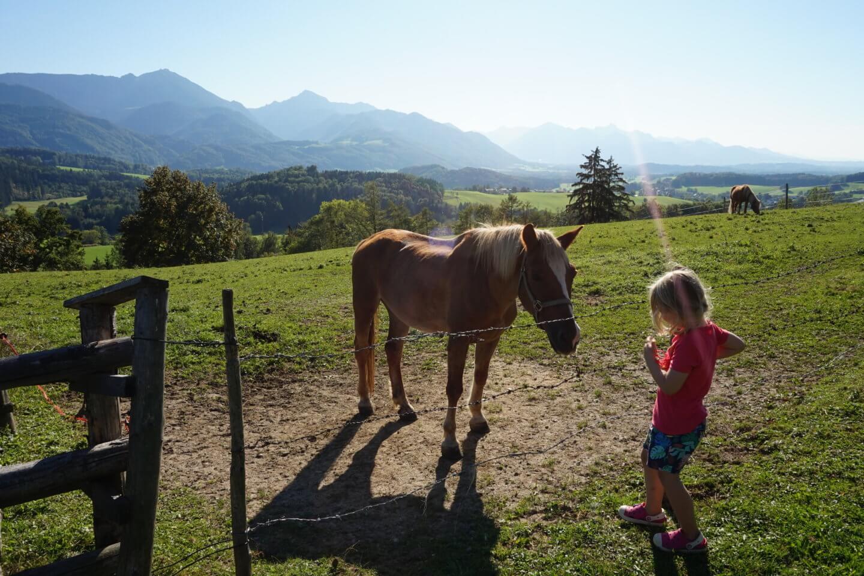 Urlaub auf dem Bauernhof – Daxelberger Hof
