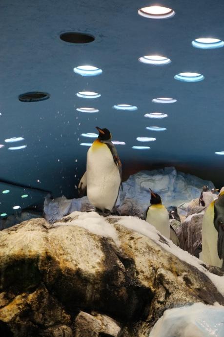 Loro Parque Teneriffa Pinguine