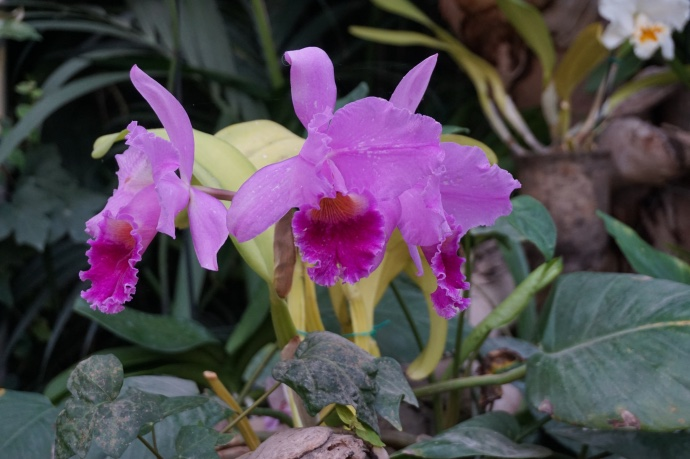 Orchideen Loro Parque Teneriffa